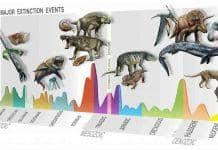 neologosattikis-Major-Extinction-Events